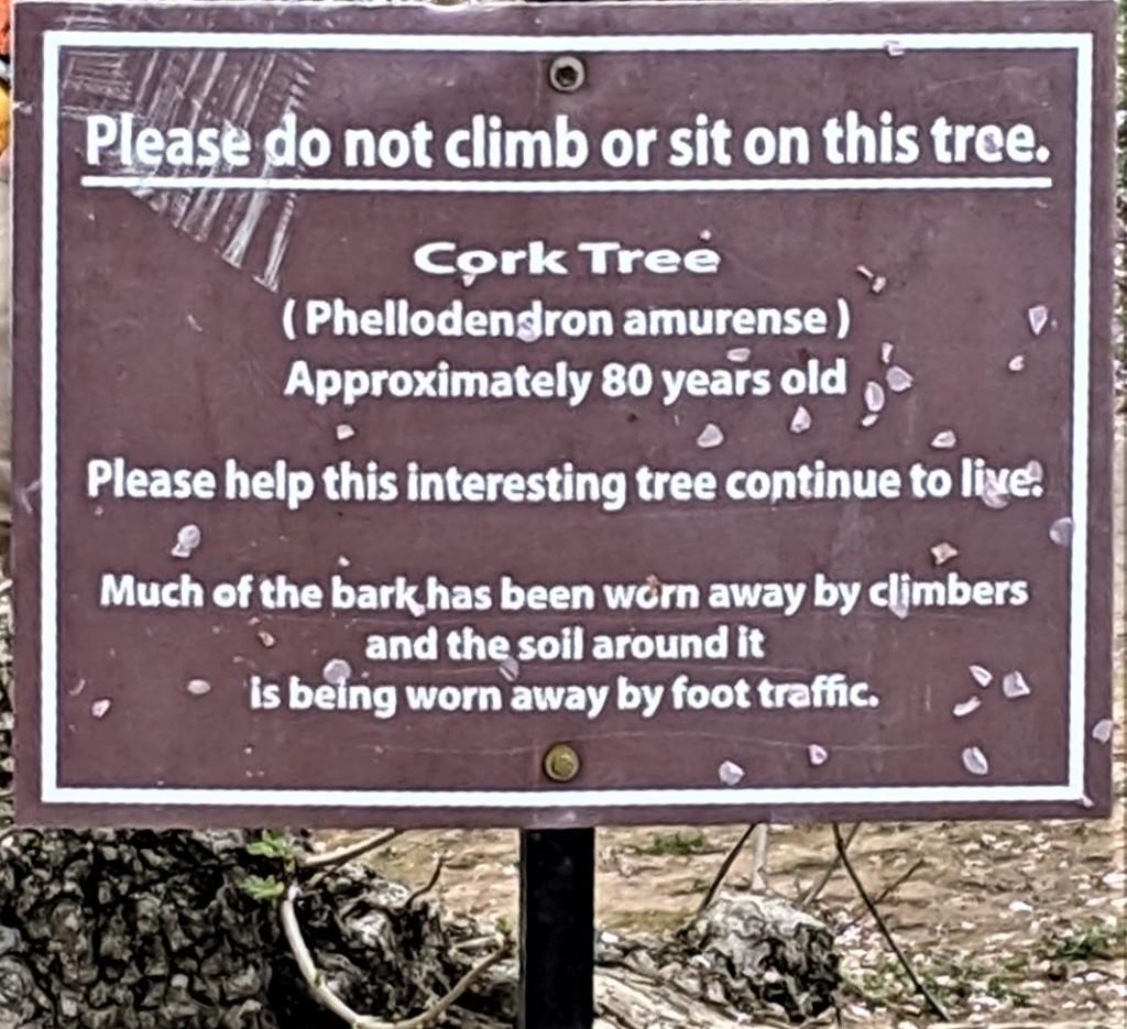 Actually, do not climb on ANY of the trees